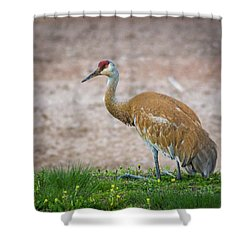 Shower Curtain featuring the photograph Crane Down by Bill Pevlor