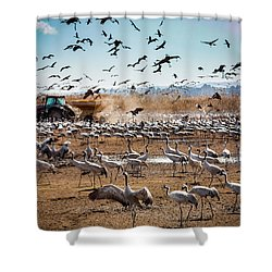 Cranes Feeding Shower Curtain