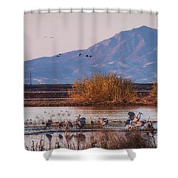 Cranes In The Morning Shower Curtain
