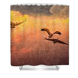 Cranes Lifting Into The Sky Shower Curtain