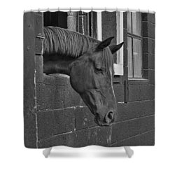 Crazy For Horses Shower Curtain