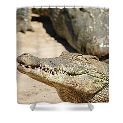 Shower Curtain featuring the photograph Crazy Saltwater Crocodile by Gary Crockett