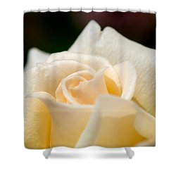 Cream Rose Kisses Shower Curtain