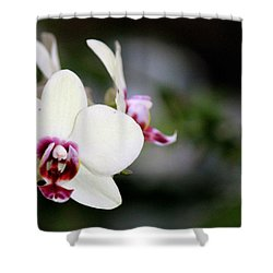Shower Curtain featuring the photograph Creaminess by Silke Brubaker