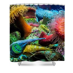 Creatures Of The Aquarium Shower Curtain