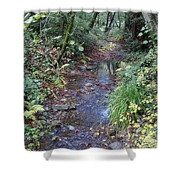 Creek On Mt Tamalpais 2 Shower Curtain