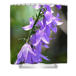 Shower Curtain featuring the photograph Creeping Bellflower  by Lyle Crump