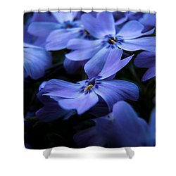 Creeping Phlox Shower Curtain by Jay Stockhaus