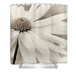 Shower Curtain featuring the photograph Creme Fraiche In Gold And White by Darlene Kwiatkowski