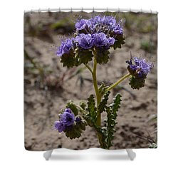 Crenulate Phacelia Flower Shower Curtain