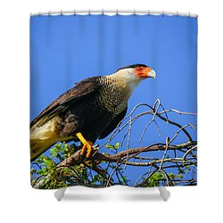 Crested Caracar Shower Curtain