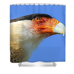 Crested Caracara Face Shower Curtain