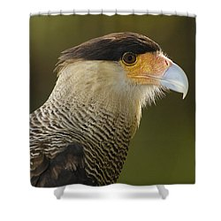 Crested Caracara Polyborus Plancus Shower Curtain by Pete Oxford