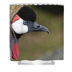 Crested Crane Shower Curtain