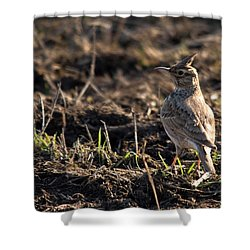 Crested Lark Shower Curtain by Cliff Norton