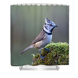 Crested Tit Shower Curtain by Torbjorn Swenelius