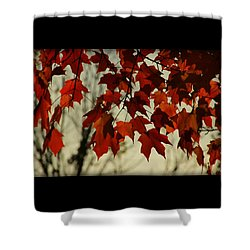Shower Curtain featuring the photograph Crimson Red Autumn Leaves by Chris Berry