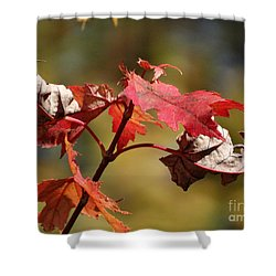 Shower Curtain featuring the photograph Crimson Fall by J L Zarek