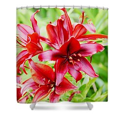 Crimson Lilies Shower Curtain