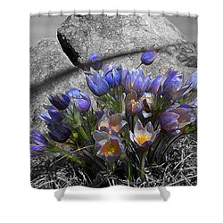 Crocus - Between A Rock And You Shower Curtain by Stuart Turnbull