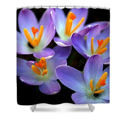 Shower Curtain featuring the photograph Crocus Aglow by Jessica Jenney