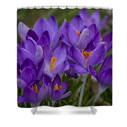 Crocus Cluster Shower Curtain