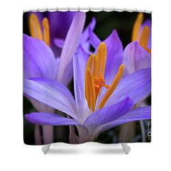 Shower Curtain featuring the photograph Crocus Explosion by Douglas Stucky