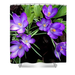 Crocus First To Bloom Shower Curtain
