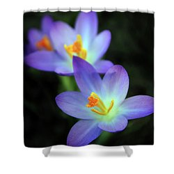 Shower Curtain featuring the photograph Crocus In Bloom by Jessica Jenney