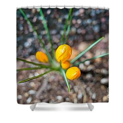 Crocus Star Shower Curtain