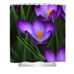 Crocus Vividus Shower Curtain