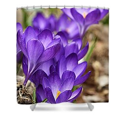 Shower Curtain featuring the photograph Crocuses by Larry Ricker