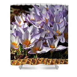 Crocuses Serenade Shower Curtain by Ed  Riche