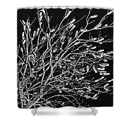 Cronulla Tree No. 62-2 Shower Curtain by Sandy Taylor