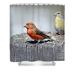 Crossbills Shower Curtain