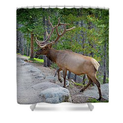 Crossing Paths With An Elk Shower Curtain