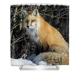 Crossroads With A Red Fox Shower Curtain