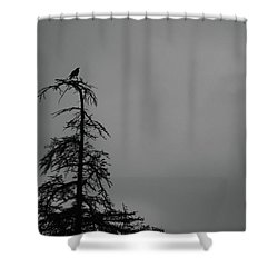 Crow Perched On Tree Top - Black And White Shower Curtain by Matt Harang