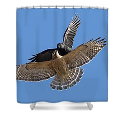 Shower Curtain featuring the photograph Crow Vs Hawk by Mircea Costina Photography