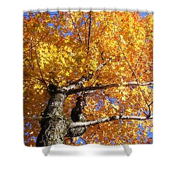 Crown Fire Shower Curtain by Dave Martsolf