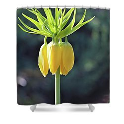 Crown Lily Shower Curtain