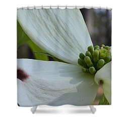 Shower Curtain featuring the photograph Crown Of Thorns by Larry Bishop