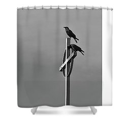 Crows On Steeple Shower Curtain by Richard Rizzo