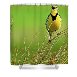 Shower Curtain featuring the photograph Crying Out II by John De Bord