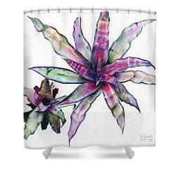 Cryptanthus Richard Lum Shower Curtain