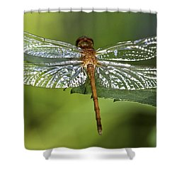 Crystal Wings Shower Curtain by Evelina Kremsdorf