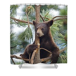 Cub In Tree Dry Brushed Shower Curtain
