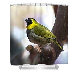 Cuban Grassquit Shower Curtain