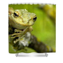 Cuban Tree Frog 000 Shower Curtain