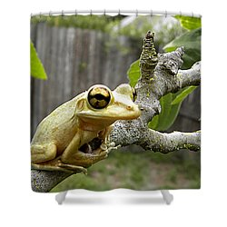 Cuban Tree Frog 001 Shower Curtain